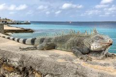 Jogi_Bonaire_2019-38a